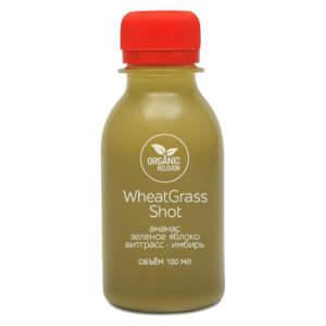wheatgrass shot 100